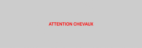 Sticker Voiture Attention Chevaux 60 x 05cm